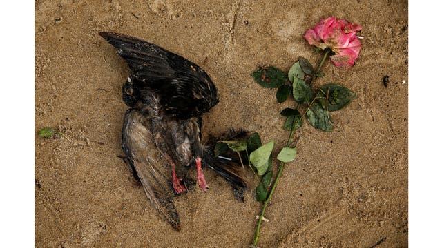 Un pájaro muerto y una rosa en la orilla