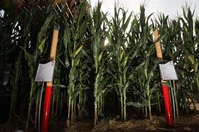 La tecnología ofrece más soluciones a los productores