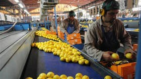 Empaque de limones en Tucumán