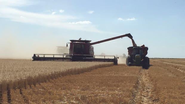 En trigo hay un pase de 9,3 por ciento