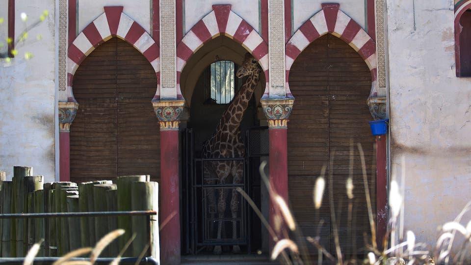 El zoológico porteño cerrará sus puertas por dos años a partir de mañana