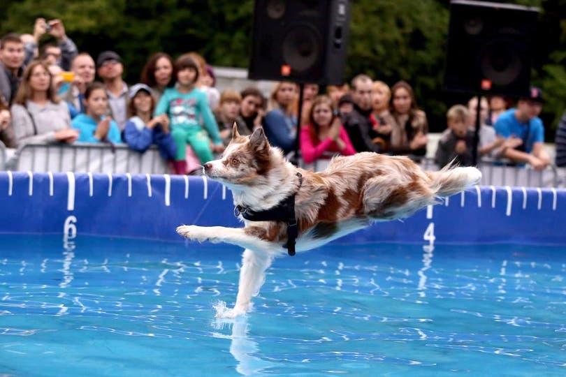 """""""¿Mi perro?, olvidate, corre sobre el agua"""". Foto: Fotos de EFE, AP, AFP y Reuters"""