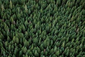 S.O.S.: los datos más impactantes sobre la deforestación de los bosques