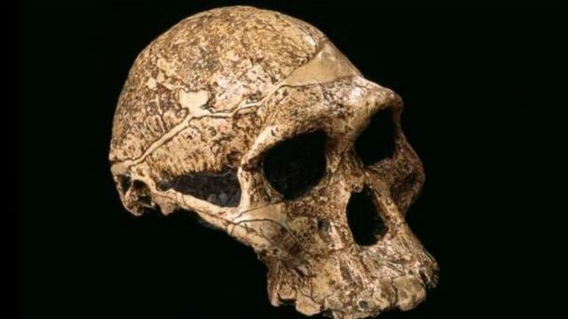 Para el tiempo de la aparición de la especie Homo erectus, hace dos millones de años, los homínidos tenían un cerebro más grande y cuerpos que requerían de un consumo mayor de energía