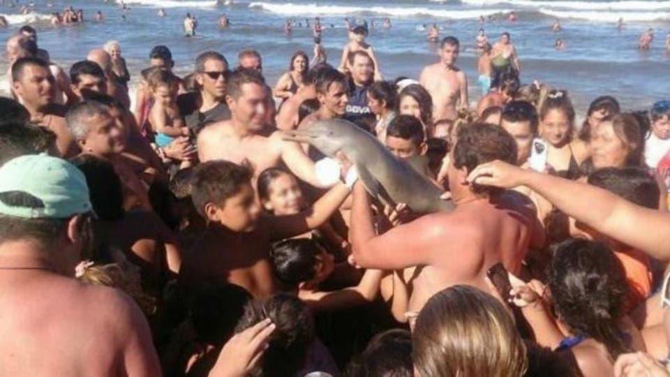 14 de febrero de 2016. Un grupo de turistas sacó del mar un delfín en Santa Teresita