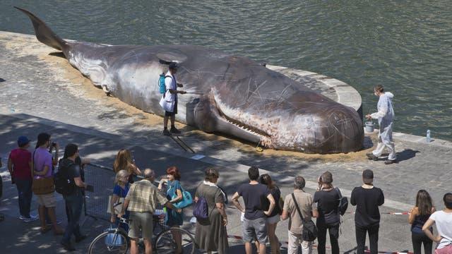 Los turistas se sorprendieron al ver la ballena