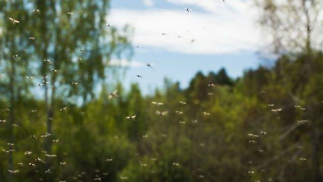 Vectrax atrae a los mosquitos pero no a los demás insectos que necesitan del néctar para sobrevivir