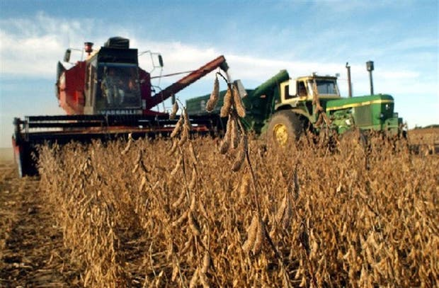 La pelea con Monsanto transcurre en plena cosecha del cultivo de soja