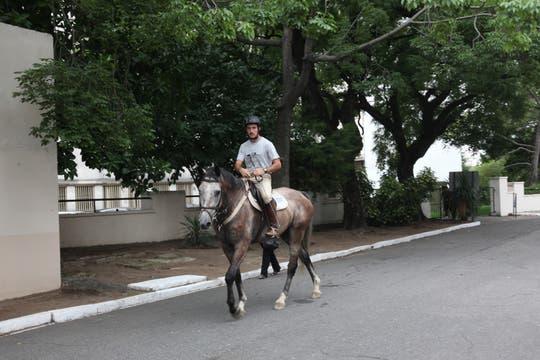 Son 400 los caballos que pertenecen al regimiento. Foto: LA NACION / Guadalupe Aizaga