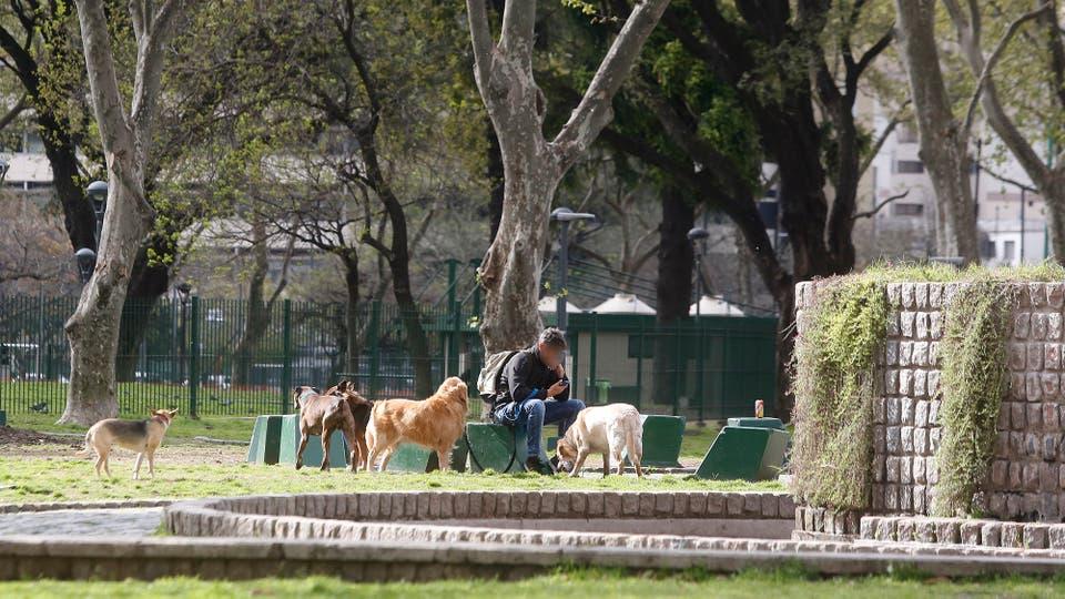 Hay lugares determinados en las plazas para llevar a los perros, los paseadores no respetan los espacios. Foto: LA NACION / Maxie Amena