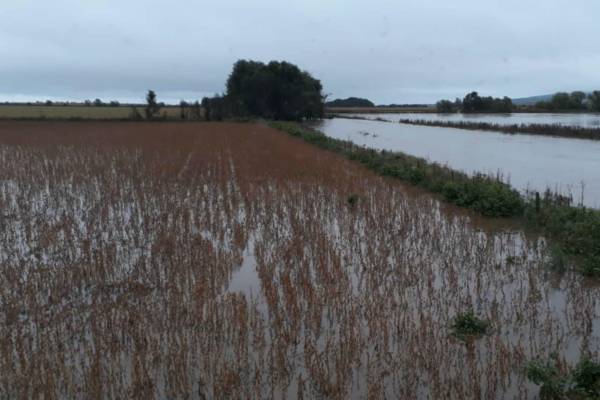 Por las fuertes lluvias se frenó la cosecha en Córdoba y no descartan pérdidas