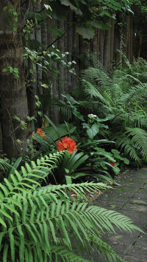 9 plantas con flores que crecen a la sombra la nacion - Plantas de jardin fotos ...