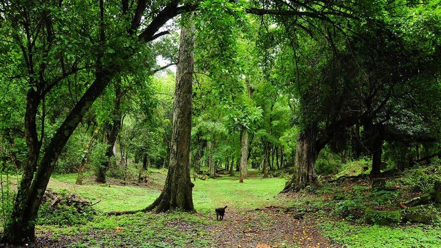 Selva Misionera. Misiones