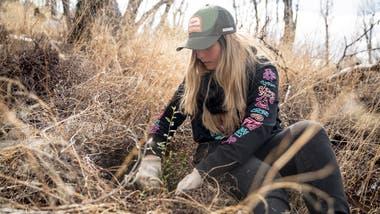 Los voluntarios plantaron 4500 árboles, entre coihues y cipreses