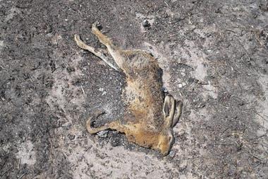 Muchos animales mueren por el avance de las llamas
