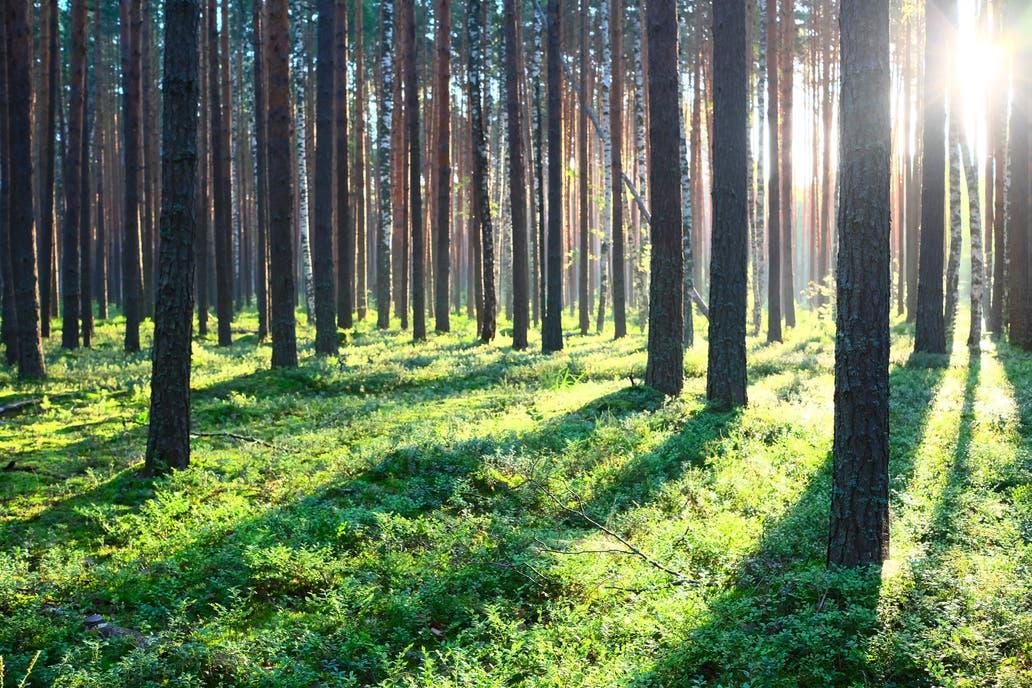 El proyecto, a largo plazo, extendería la forestación a 10 mil / 20 mil hectáreas en ambas provincias
