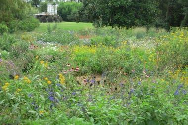 Vista de la pradera hecha para que las mariposas puedan alimentarse bien, y se reproduzcan mejor. Lo que se espera es que las plantas perennes rebroten en la primavera, o las semillas que caen se resiembren.