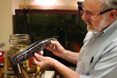 Este pez cabeza de serpiente del norte fue hallado en 2005 en Filadelfia; se cree que muchos peces fueron liberados intencionalmente por personas que los compraron en acuarios como mascotas
