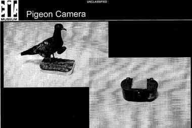 La CIA experimentó con palomas equipadas con cámaras para tareas de espionaje