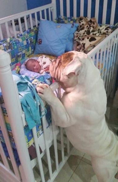 Jerónimo cuando era un bebé junto a Zeus, el bulldog que defiende a capa y espada