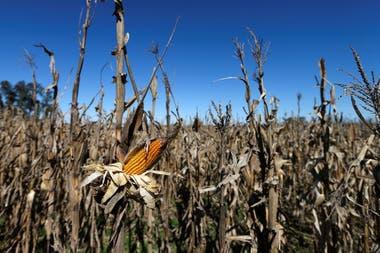 El cereal creció cuando se eliminaron las barreras al comercio