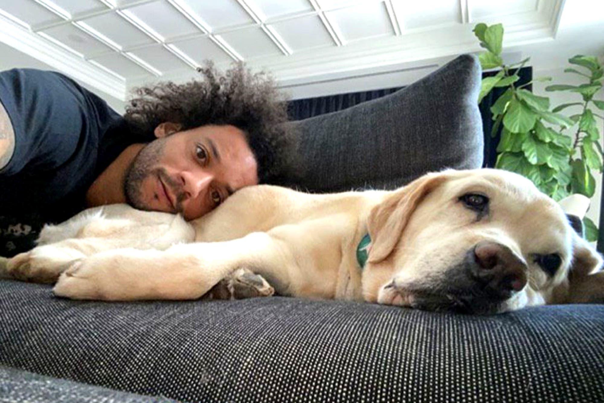 Los tiernos perros que acompañan al brasileño Marcelo en la cuarentena