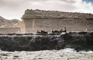 Lobos marinos en la reserva de Punta Loma.