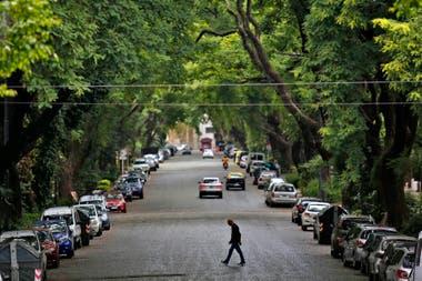 El túnel de árboles a lo largo de la avenida Melián, en Belgrano