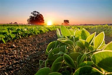 Se requieren alrededor de 80 kilos de nitrógeno para producir una tonelada de soja