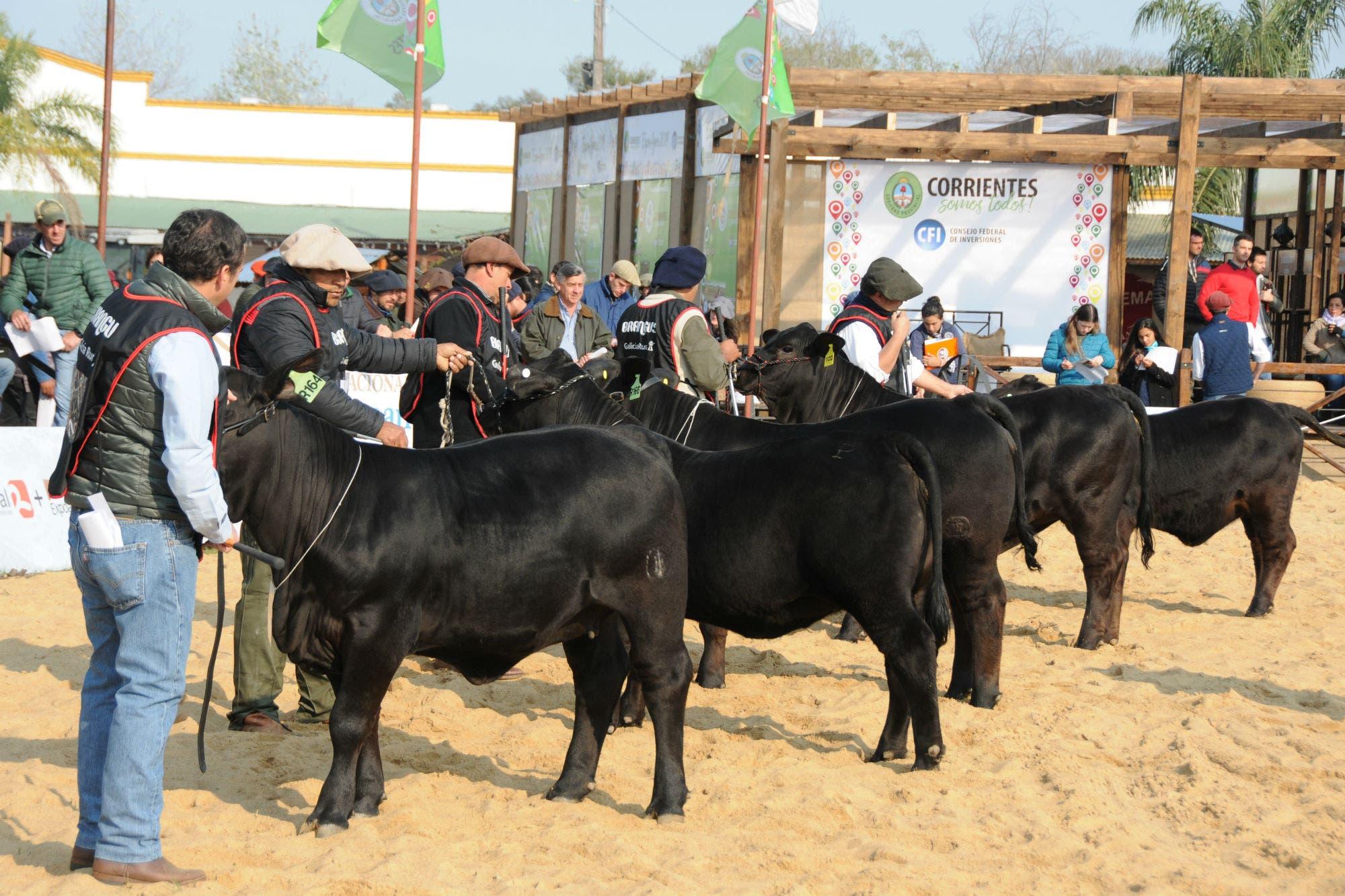 Expoagro en La Rural de Corrientes. Fuerte apuesta por el negocio de todas las carnes