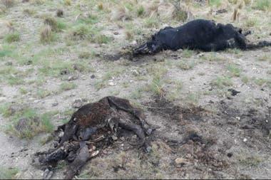 Las restricciones en San Luis le generaron serias dificultades a Aguado por los animales muertos