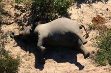 Aseguran que los elefantes murieron debido a la presencia de un tipo de toxinas que suelen encontrarse en sus pozos de agua