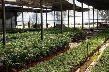 Para emplear a esas mujeres que acompañaban a sus maridos en el campo, crearon un vivero con plantas del lugar, donde ellas puedan desarrollarse
