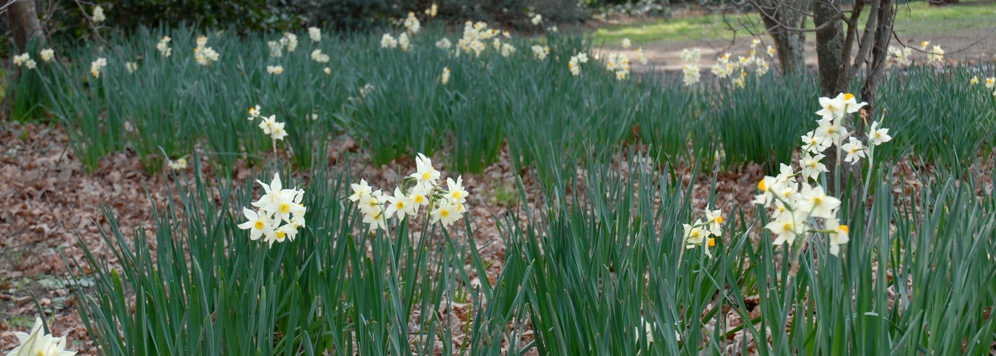 10 flores de primavera con perfumes maravillosos para tener
