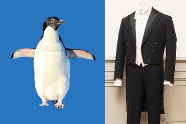 La morfología del frac se define a partir de la silueta del pingüino