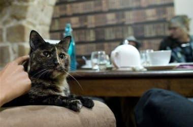 Acá no hay gato encerrado: los felinos son amos y señores de la casa