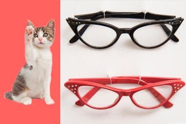 Cuando los ojos de un gato pasan a ser el marco de un par de anteojos