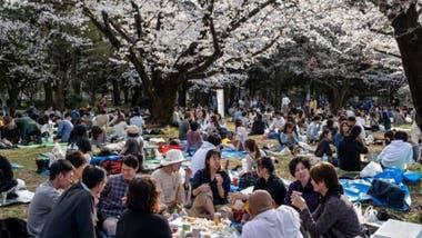 En contraste con lo que está ocurriendo en otros lugares del mundo por el coronavirus, los japoneses no han dejado de reunirse para admirar a sus cerezos en flor