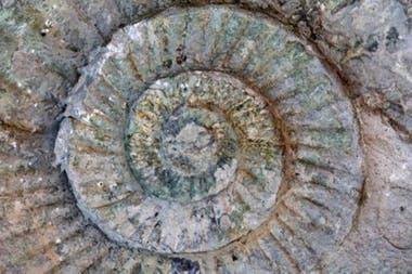 """El mapa permite """"viajar"""" a cuando aparecieron las primeras formas de vida en la Tierra."""