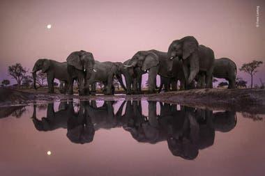 Categoría Premio a la trayectoria: Frans Lanting (Holanda), fotografió una manada de elefantes en busca de agua en la época de sequía en Botswana