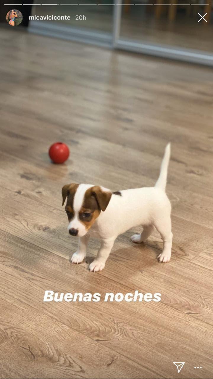 Cuarentena por coronavirus: los tiernos cachorros de Fabián Cubero y Mica Viciconte, una de las parejas que más se divierte en las redes sociales