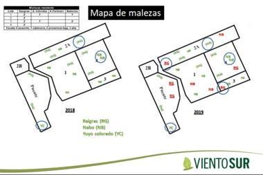 Mapa de malezas elaborado por Julio Portugal