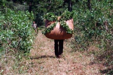 Los productores de yerba mate, que pagaban $3 por dólar exportado, son uno de los principales beneficiados por la quita de retenciones