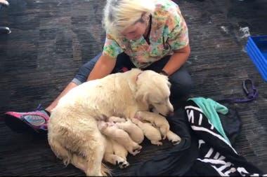 Los cachorros fueron bautizados con los nombres de algunos de los bomberos que ayudaron en el parto.
