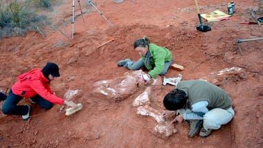 Los científicos, desenterrando los restos fósiles de la nueva especie de dinosaurio herbívoro