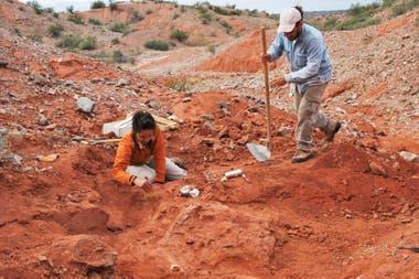 Los científicos trabajando en el lugar donde fueron encontrados los restos del dinosaurio