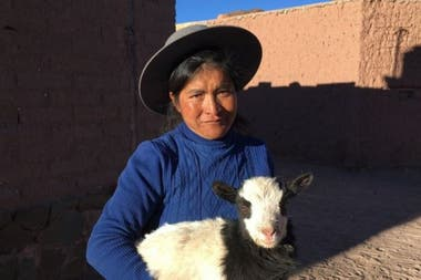 Tomasa Soriano cría cabras y llamas en Jujuy. Ella cree que hay menos agua en la zona desde que llegaron los mineros de litio