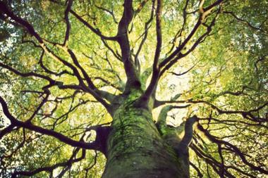 La explotación sostenible de la biodiversidad es un reto para el mundo