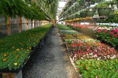 Qu plantas podemos conseguir hoy en los viveros la nacion for Viveros de plantas en buin