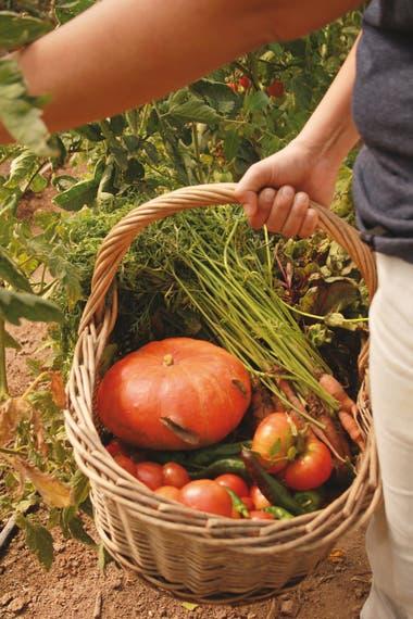 """""""Si en el calendario dice que es un día fruto, significa que es un día apto para cosechar, ya que la planta está concentrando toda su energía y nutrientes en el fruto"""", señala Pablo Asef"""